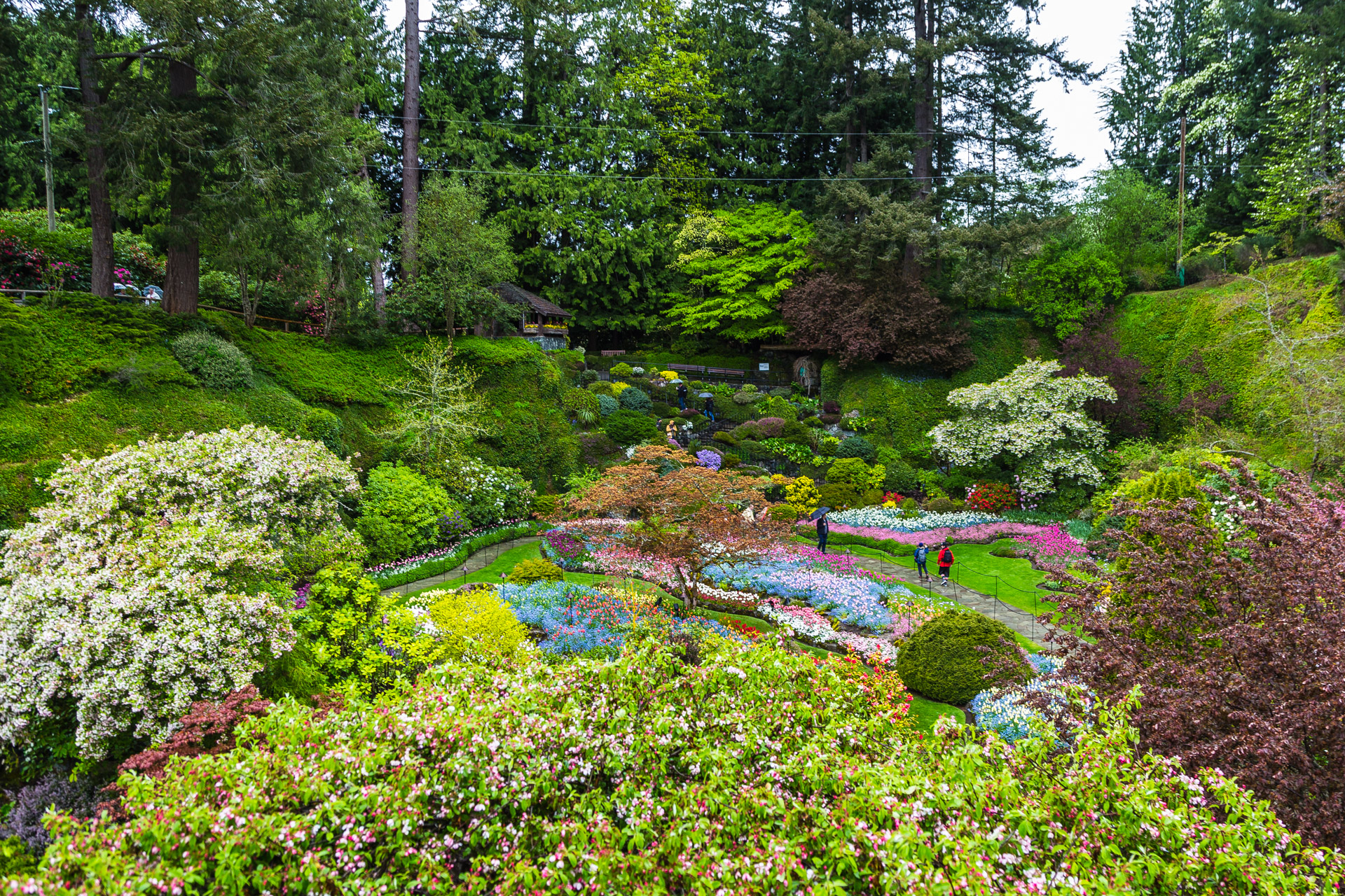 A Beautiful Rainy Day At The Butchart Gardens