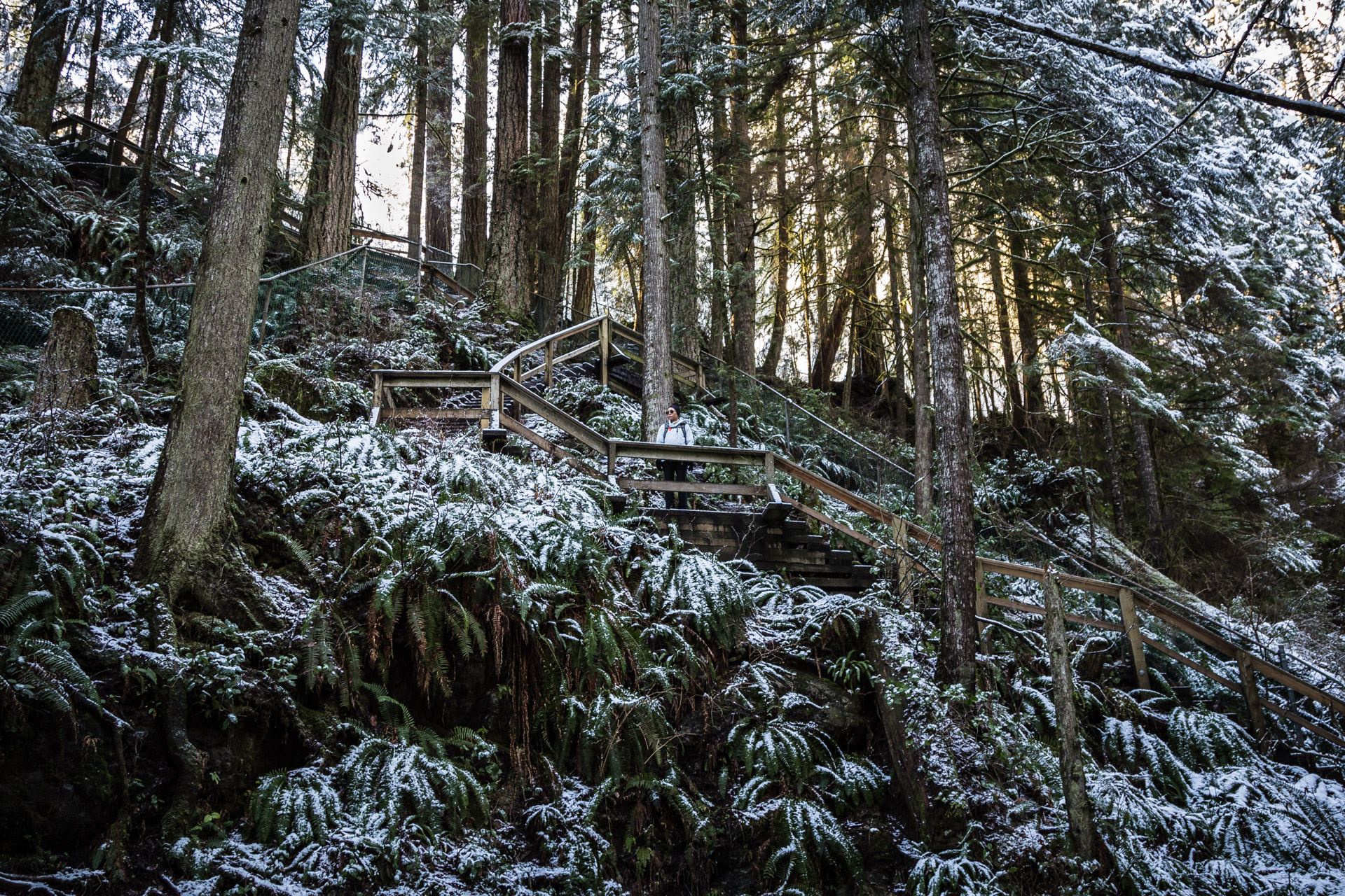 A Light Dusting Of Snow At Lynn Canyon Park