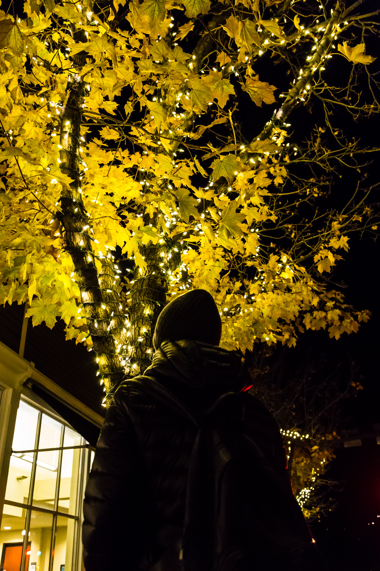 Aspen Lights (Tree)