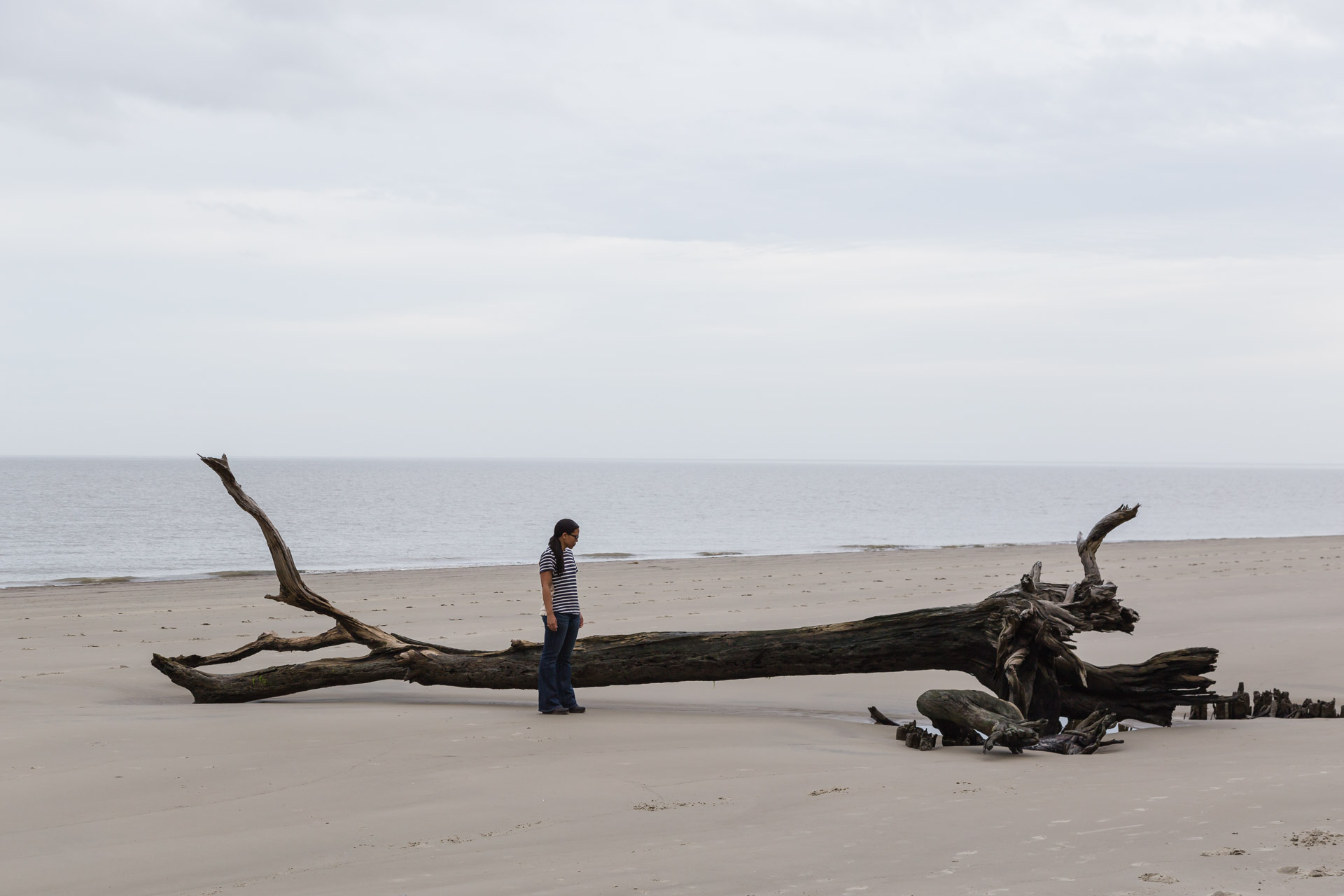 Drifting Along Driftwood Beach (beach tree)