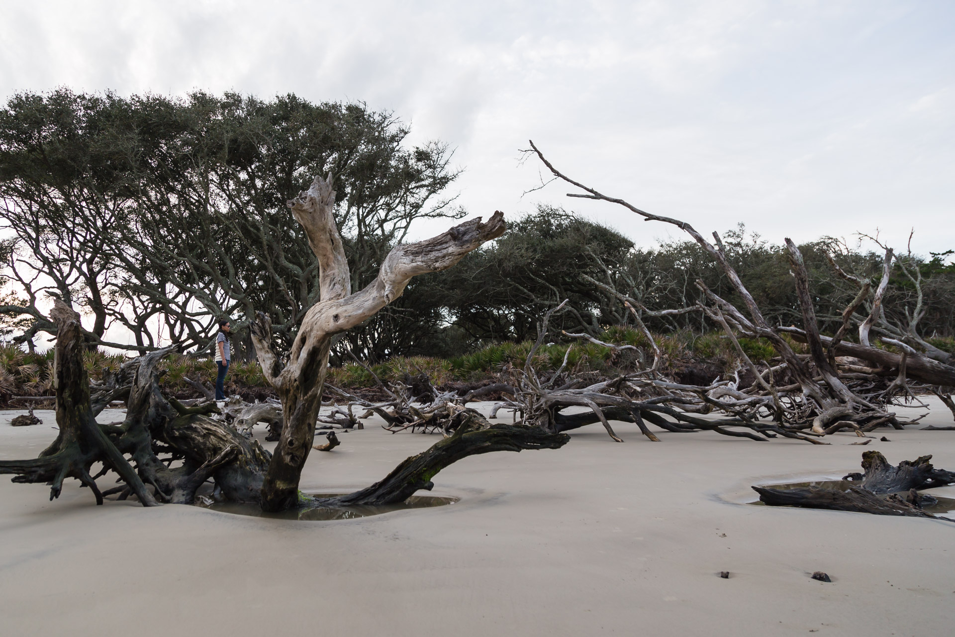 Drifting Along Driftwood Beach (jungle standing)