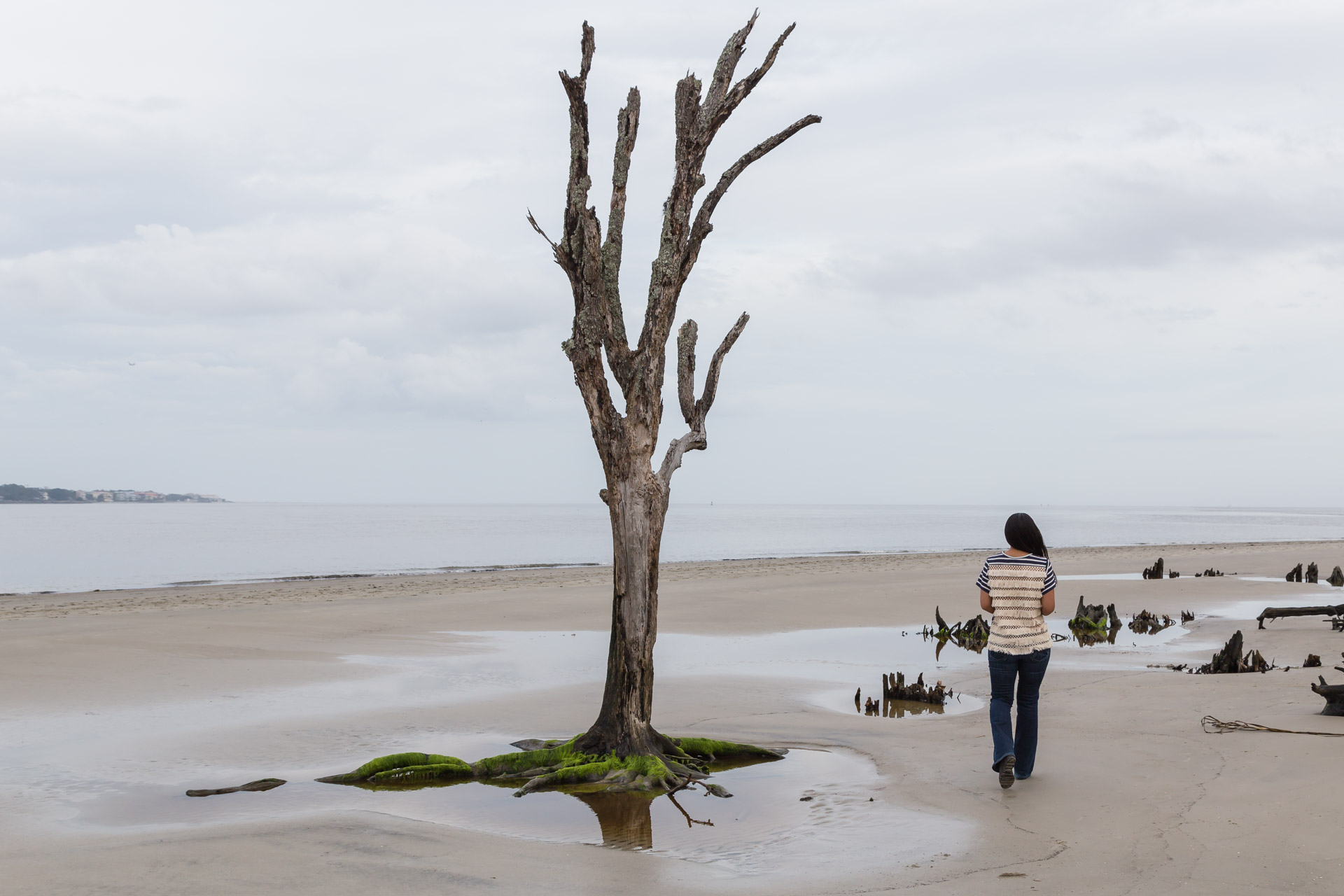 Drifting Along Driftwood Beach (tree)