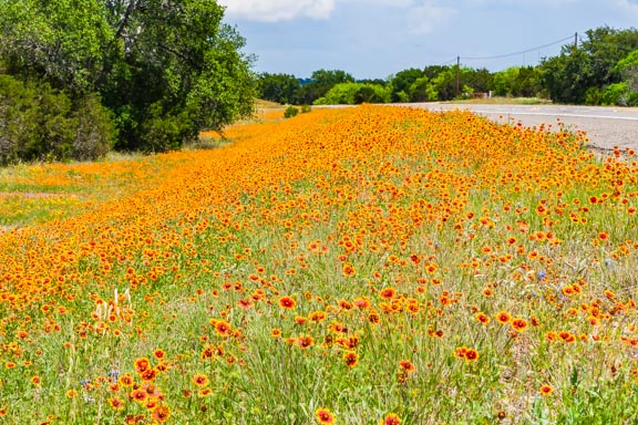 Flashback Trip: Texas Roadside Wildflowers
