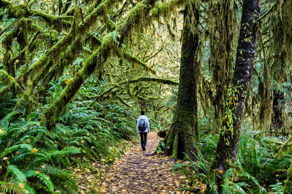 Hiking The Quinault Rainforest