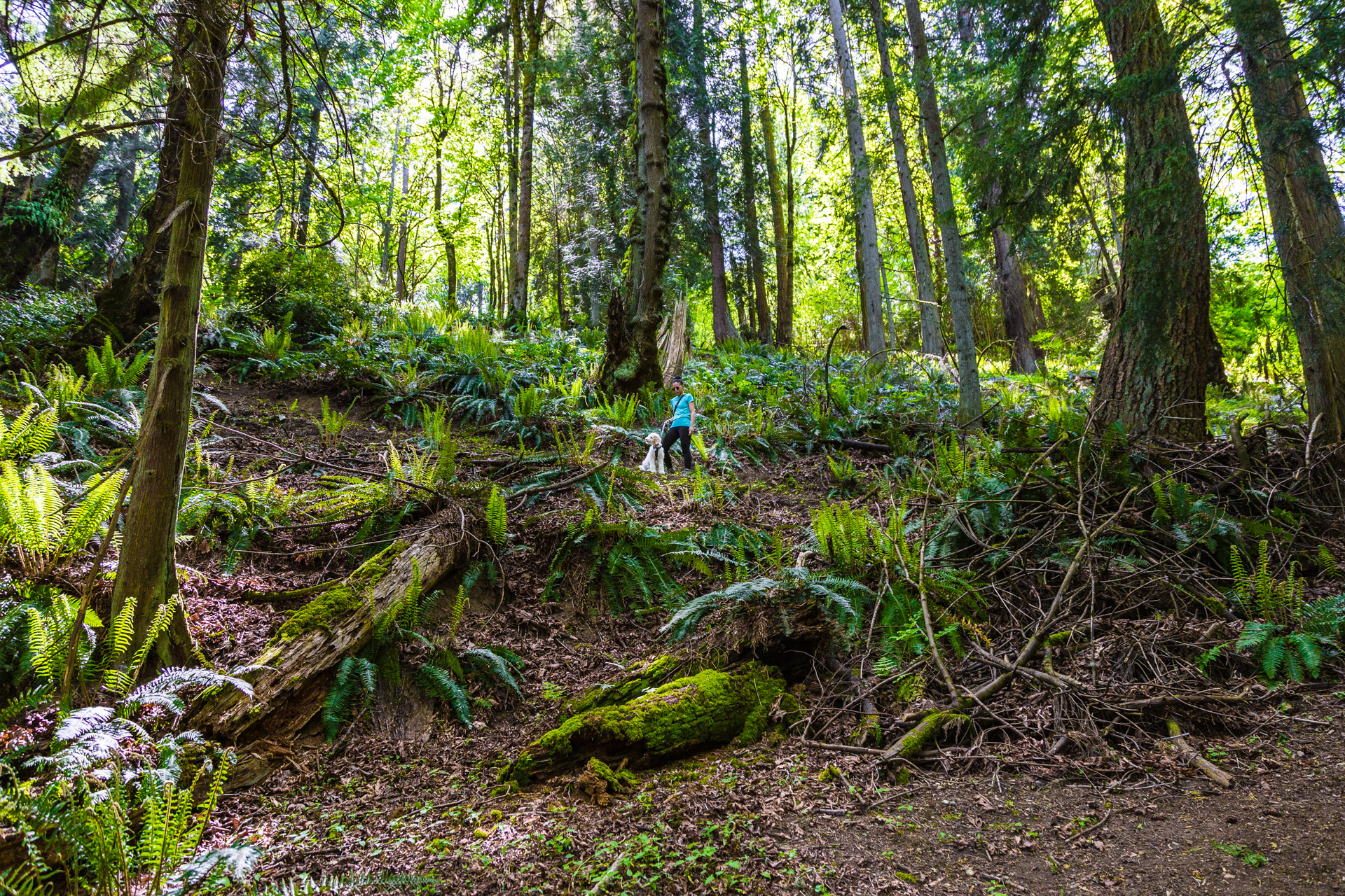 Introducing Prana To Hiking At An Urban Forest In Bellevue