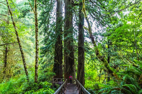 Hiking Amongst Giants at Redwood National and State Parks Part 1