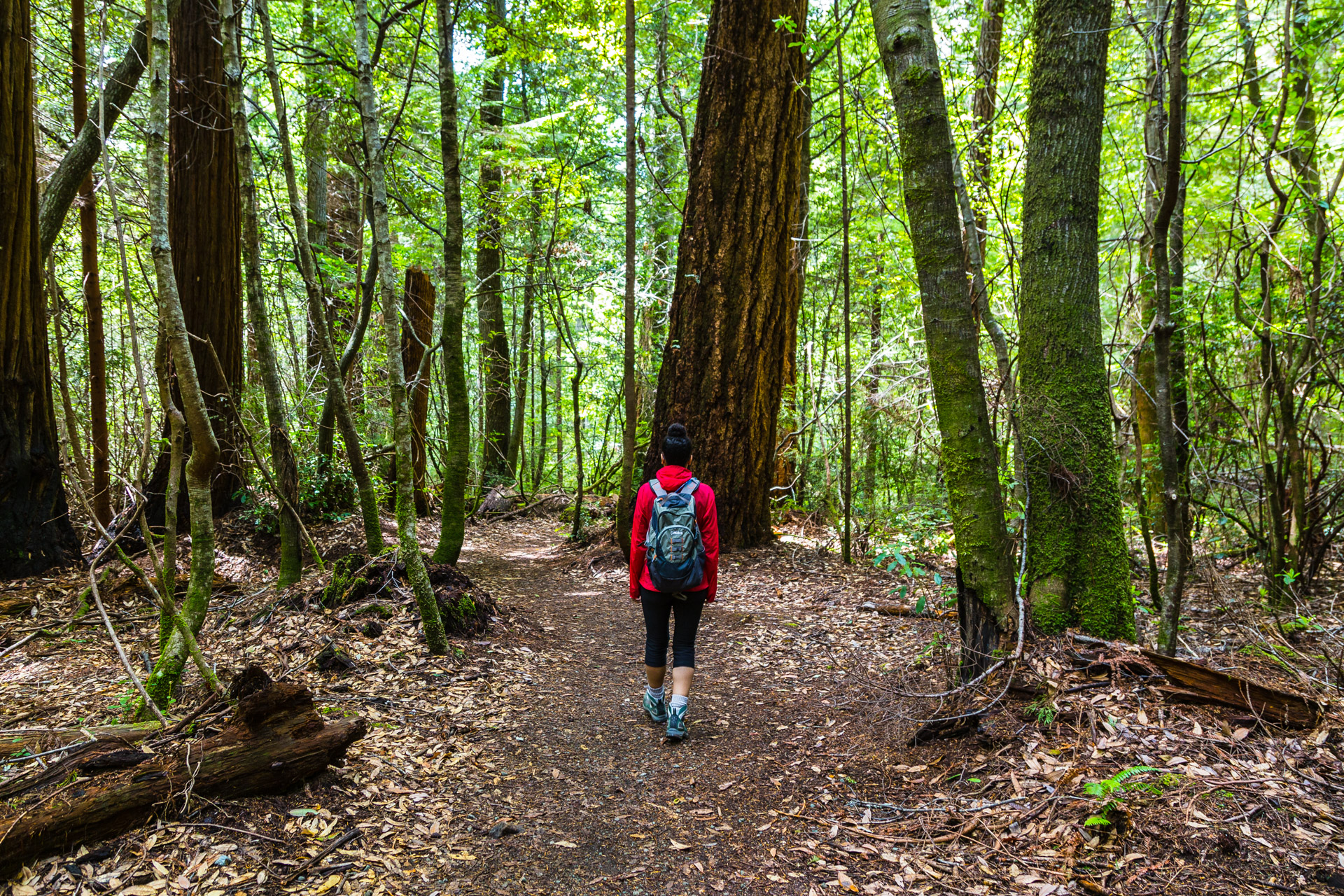 Hiking Amongst Giants At Redwood National and State Parks Part 2