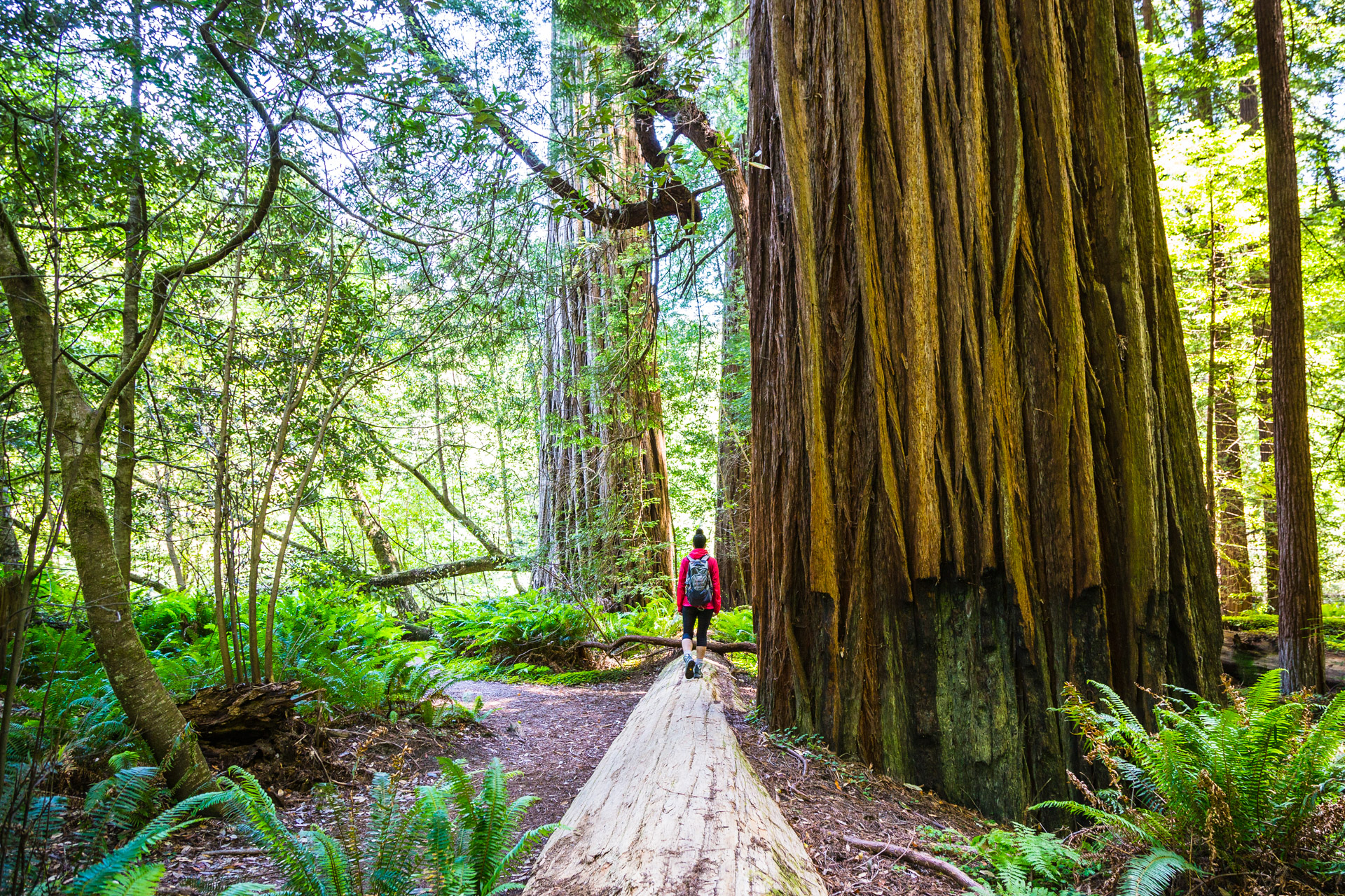 Redwood National Park (20)
