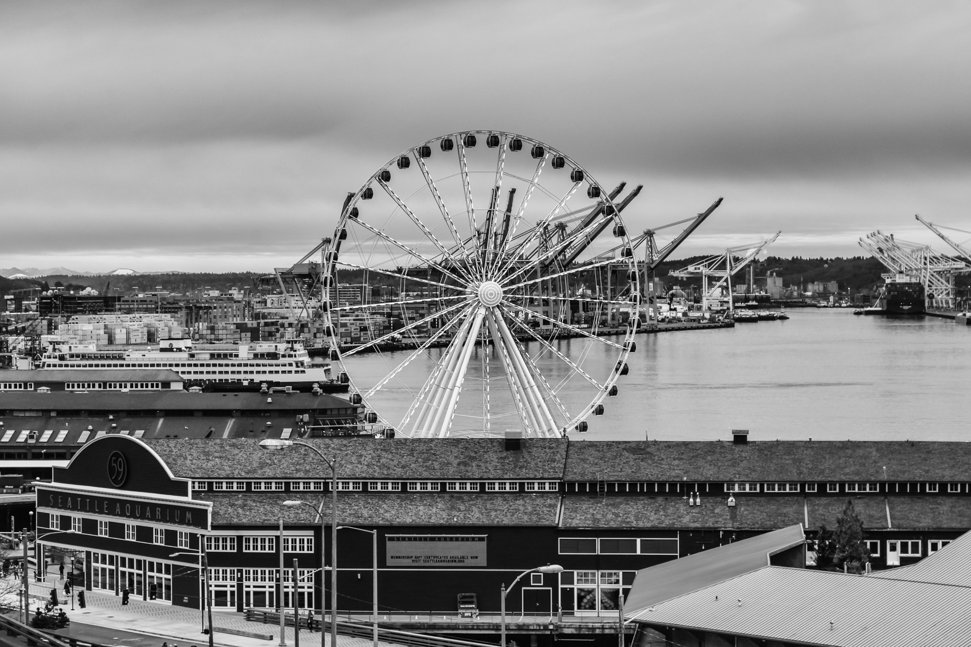 Seattle Black And White (6)