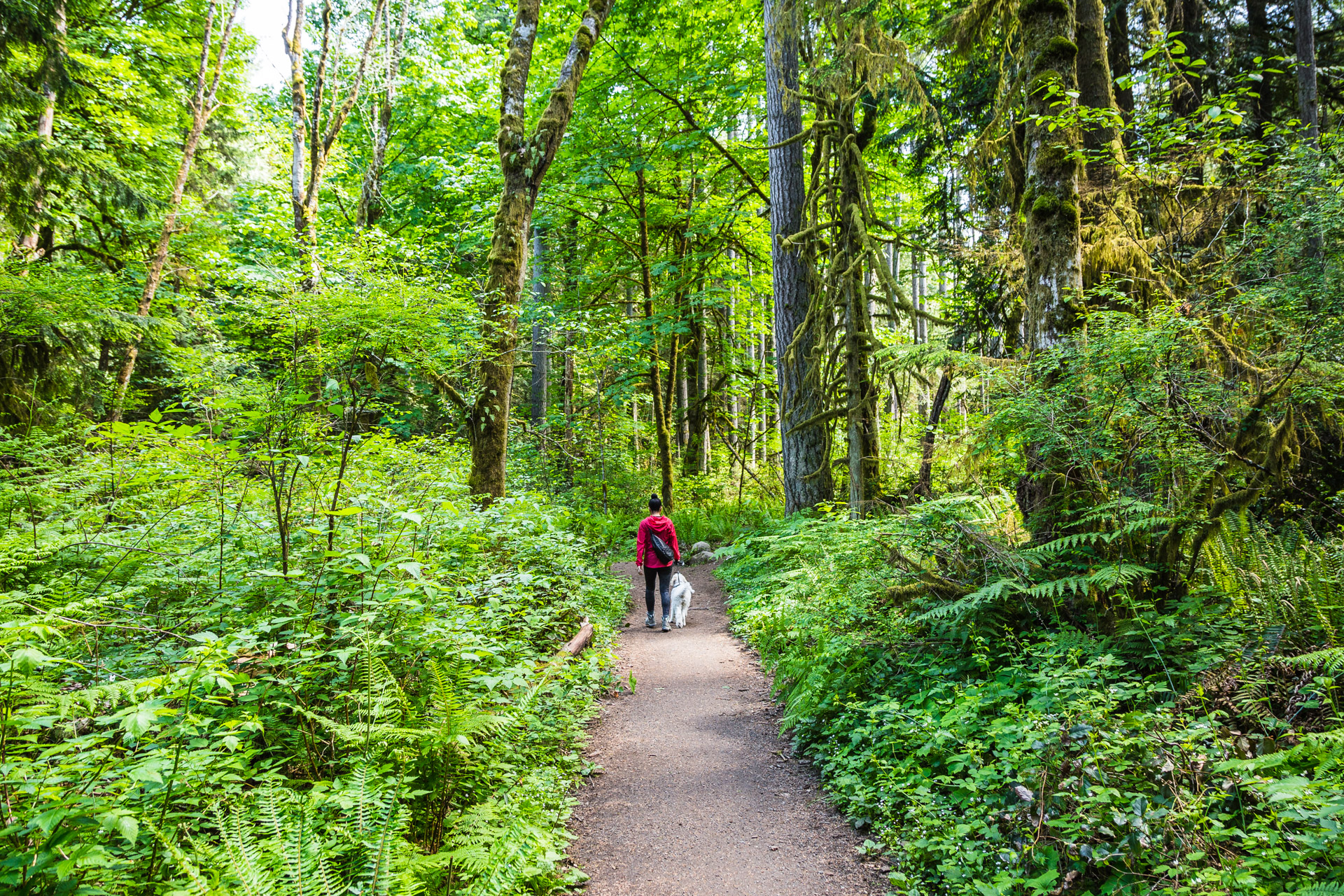 The Grand Forest On Bainbridge Island